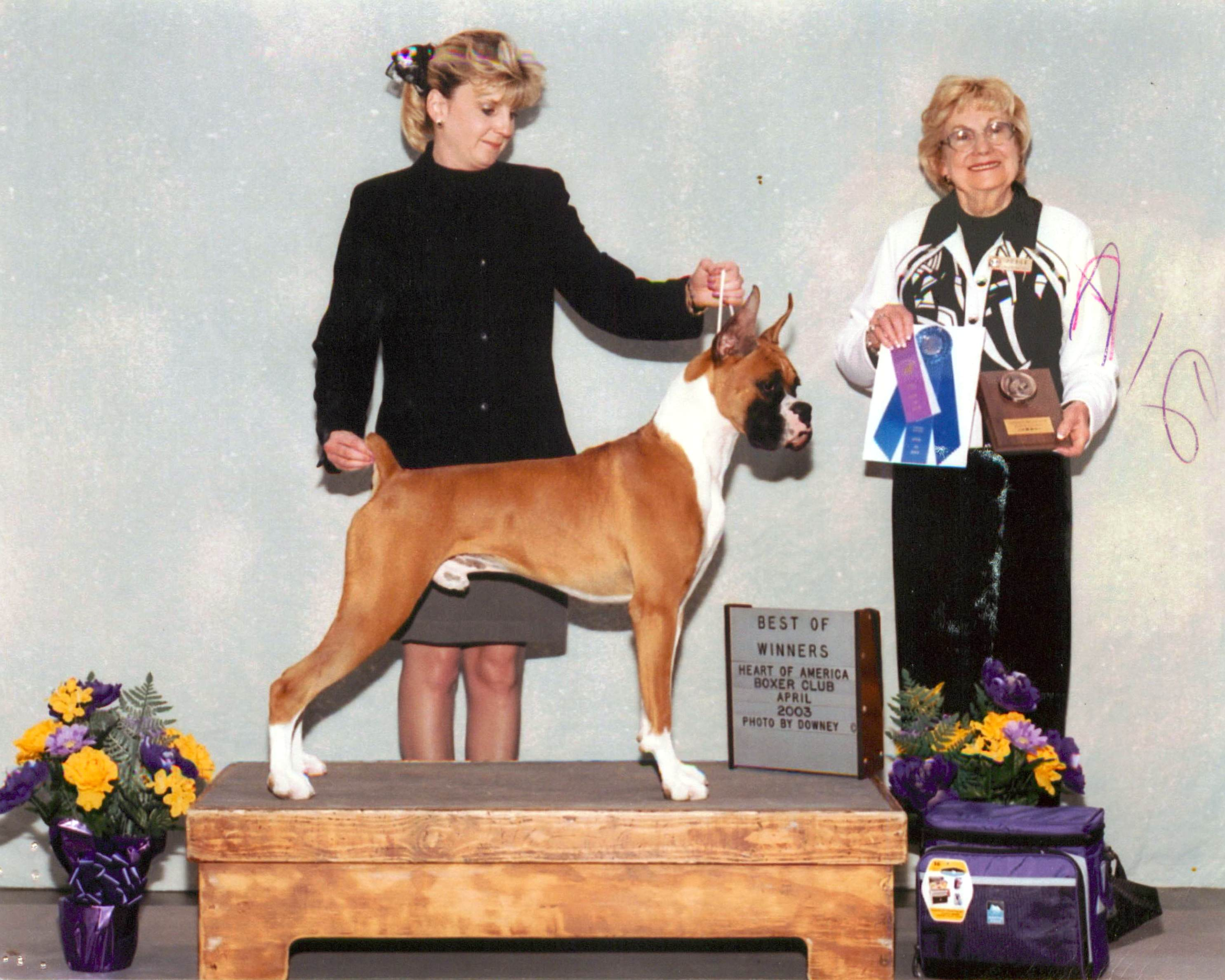 Best of Winners & Winners Dog @ 2003 Specialty Show #1