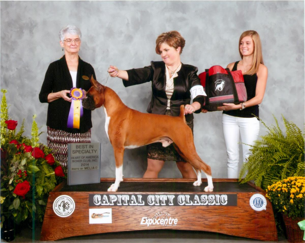 Best of Breed @ 2014 Specialty Show #2