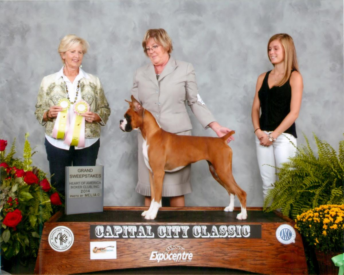 Grand Sweeps & Best Puppy @ 2014 Specialty Show #2